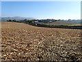 SJ1253 : Maize stubble in a field near Llanfair Dyffryn Clwyd by Eirian Evans