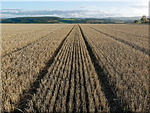 NH6454 : The Roskill Prairies long after the harvest by Julian Paren