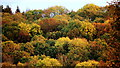 SO6023 : October foliage, Penyard Hill : Week 42
