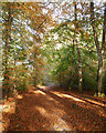 NH5356 : Path through beech trees, in Broad Wood by Craig Wallace