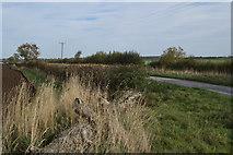 TA1342 : Whins Lane, near Long Riston by Paul Harrop