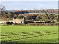 NZ1320 : Field with emerging crop (2) by Trevor Littlewood