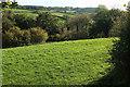 SX4865 : Field and wood near Milton Combe by Derek Harper