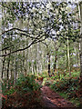 SO8383 : Woodland track on Kinver Edge in Staffordshire by Roger  Kidd