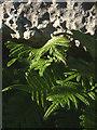 SD5579 : Ferns, Newbiggin Crags by Karl and Ali