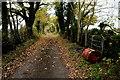 H3679 : Fallen leaves along Cairn Road by Kenneth  Allen