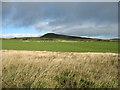 NO2404 : Sheep grazing below East Lomond by David Purchase