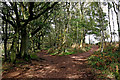 SO8282 : Woodland paths on Kinver Edge in Staffordshire by Roger  Kidd