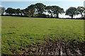 SX5071 : Field near Fullamoor by Derek Harper