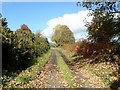 J0017 : Leaf litter on the Upper Road, Mullaghbawn by Eric Jones