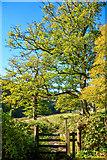 ST7734 : Wiltshire : Stourhead - Footpath Stile by Lewis Clarke