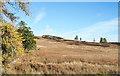 NO1155 : Moorland slope rising by Trevor Littlewood