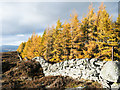 NO1256 : Summit of Hill of Persie by Trevor Littlewood