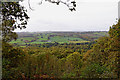SO8282 : Kinver Edge woodland in Staffordshire by Roger  Kidd