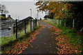 H4572 : Fallen leaves along the bypass path, Omagh by Kenneth  Allen