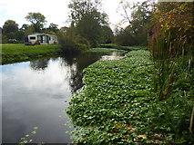 TQ0481 : River Colne near Iver Lane by Marathon