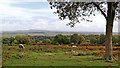 SO8383 : Heathland south-west of Kinver in Staffordshire by Roger  Kidd
