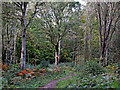 SO8383 : Woodland track south-west of Kinver in Staffordshire by Roger  Kidd
