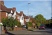 SO9096 : Westminster Road in Penn, Wolverhampton by Roger  Kidd