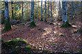 NH5966 : On the esker ridge, Evanton Community Wood by Julian Paren
