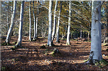 NH5966 : Broadleaf habitat of Evanton Community Wood by Julian Paren