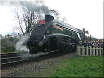"""TQ4023 : No. 60009 """"Union of South Africa"""" at the Bluebell Railway by Andrew Diack"""
