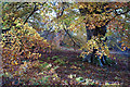 NH5857 : Beech leaves in autumn, Drummondreach Wood : Week 44
