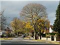 NZ2713 : Salutation Road : Week 45