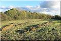 SU8980 : Hay Field alongside Green Lane by Des Blenkinsopp