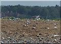 TG0245 : Little Terns nesting on Blakeney Point by Hugh Venables