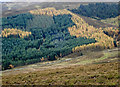 NO1761 : Coniferous plantation on north side of Meall Mòr by Trevor Littlewood