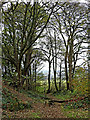SO8681 : Woodland view in the Fairy Glen near Caunsall by Roger  Kidd