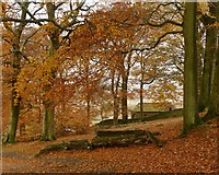SK2579 : Autumn colour at Granby Barn by Graham Hogg