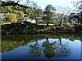 SO5309 : Trees reflected in the River Wye by Philip Halling