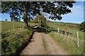 SO5311 : Driffield's Lane by Philip Halling