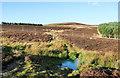 NO2252 : Deer fence built across hill track by Trevor Littlewood
