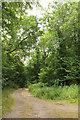 SU0334 : Footpath to Grovely Farm by Derek Harper