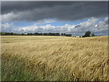 NS9740 : Field of barley by Jonathan Thacker