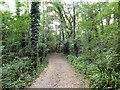 TQ2240 : Mountnoddy Wood by Gerald England