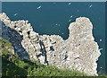 TA2073 : Gannets nesting on Scale Nab by Mat Fascione