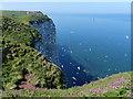 TA1974 : Bempton Cliffs Nature Reserve by Mat Fascione