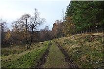 NJ1619 : Campdalemore Wood by Anne Burgess