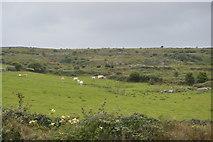 M2300 : Grazing land by N Chadwick