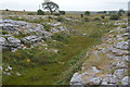 M2300 : Limestone dry valley by N Chadwick