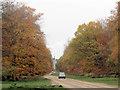 SP9712 : Autumn colours along the avenue at Ashridge by Chris Reynolds