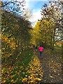SK2071 : Autumn colour on the Monsal Trail by Graham Hogg