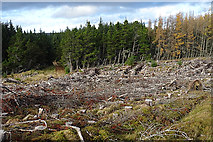 NJ1825 : Felled Forest beside the Tomintoul Spur of the Speyside Way by Anne Burgess