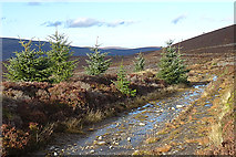 NJ1826 : Tomintoul Spur of the Speyside Way by Anne Burgess