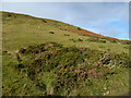 SO2334 : Sheep grazing above Gospel Pass by Christine Johnstone