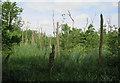 TG3427 : Dead trees in Mown Fen by Hugh Venables